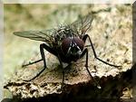 un cheval des mouches les protections contre les insectes. Black Bedroom Furniture Sets. Home Design Ideas